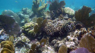 Belize-Barrier-Reef-asimulator