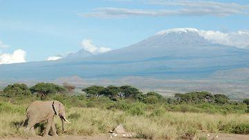 kilimanjaro-by-cjasik