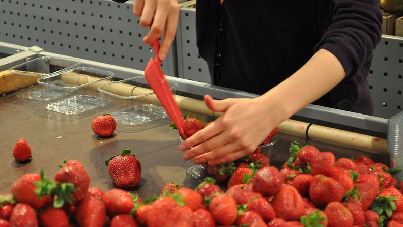 Nuoren tekemä työ, esimerkiksi mansikanmyyjänä, saattaa leikata perheen etuuksia. Kuva: Lehtikuva