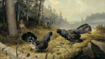 Ferdinand von Wright: Taistelevat metsot (1886) Kuva: Ateneum
