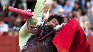 Spanish bullfighter Curro Diaz is gored by a bull during a bullfight at Seville's Fair in Seville, Spain, 07 May 2011.