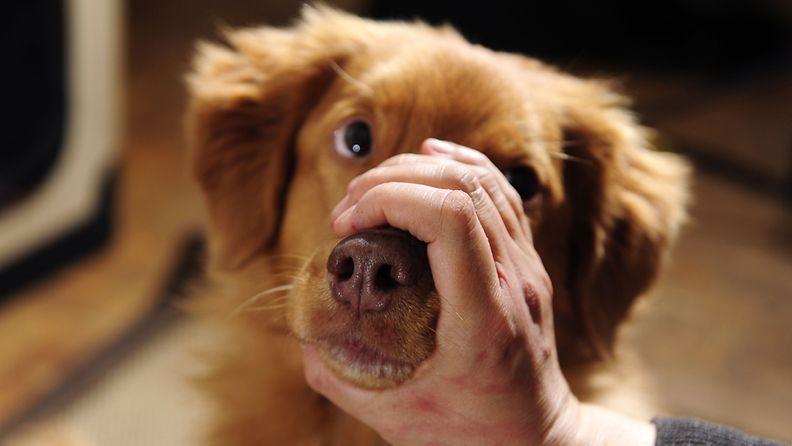 Kuvituskuva: Koiraa ei vahingoitettu kuvauksessa