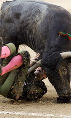 Spanish torero Jose Mora is gored by a bull during a bullfight during the Autumn Fair at Las Ventas bullring in Madrid, Spain, 02 October 2011.