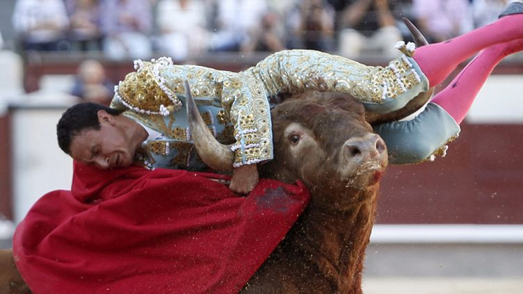 Mexican bullfighter Fermin Spinola is tossed by a bull during a bullfight at Las Ventas bullring in Madrid, Spain, 12 October 2011.