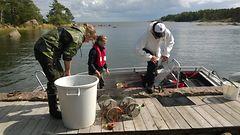 Amatööritutkijat selvittävät itäisen Suomenlahden tilaa