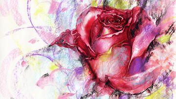 Ruusun terälehdet