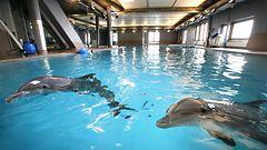 Delfiini N�si kuoli S�rk�nniemess�