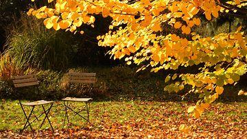 puutarha syksyllä