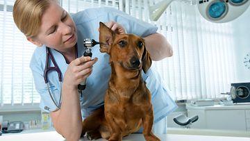 eläinlääkäri