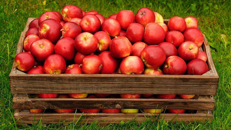 omenalaatikko