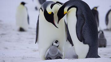 pingviini,-onhan-kaikki-hyvin