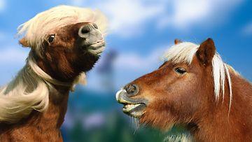 Hevoset,-nyt-on-tukka-hyvin