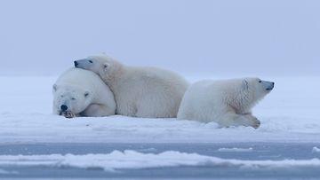Jääkarhu-ei-hätää,-pidän-teidät-lämpimänä