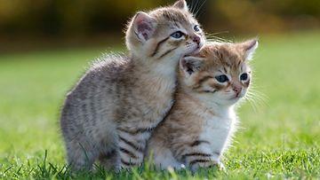 Kissanpennut,-ethän-vai-jätä-minua-yksin