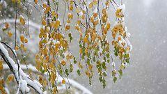 Lumipyry perjantaina osaan maata – viikonloppuna jopa +10 astetta