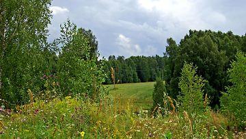 metsä_kesä