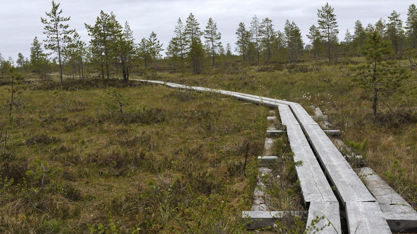 Suomen Suot