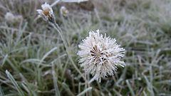 """Kylmää ilmaa Siperiasta – pakkaspäiviä koko maahan: """"Talvirenkaita jo alle"""""""