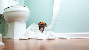 Kokeile: Nerokas niksi s��st�� vessapaperia lapsiperheiss�!