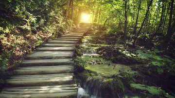 Millaisia polkuja olet ennen kulkenut?