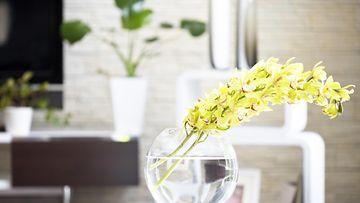 Orkideoita olohuoneessa