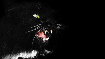 Sähisevä kissa