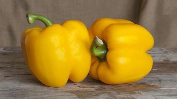 Keltainen paprika