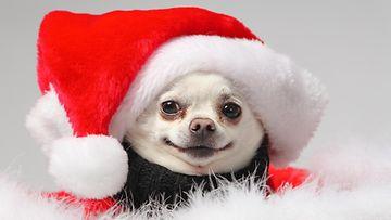 tonttu, koira, joulu