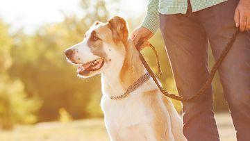 Koiran-avulla-saa-helpommin-seuraa
