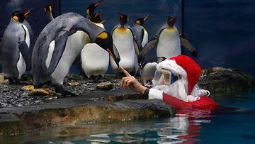 Joulupukki vieraili eläinten luona. Marineland, Antibes, Ranska. 19.12.2014.