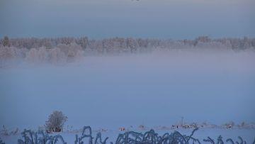 Kiristyvä pakkanen sai usvan nousemaan Utajärvellä 28. joulukuuta 2014. Lukijan kuva: Sinikka Kujala