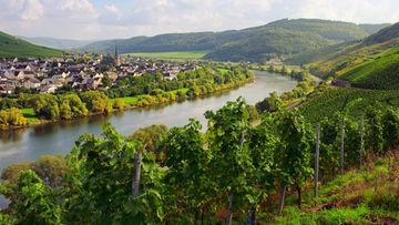 moselle-winery-river