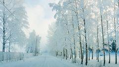 Lukijoiden upeat kuvat: Huurre kuorrutti puut talven satumaaksi