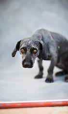 Hylätyt koirat Heidi Strengell (5)