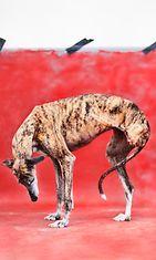 Hylätyt koirat Heidi Strengell (6)