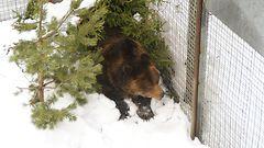 Ranuan karhuherra Palle-Jooseppi heräsi talviunilta