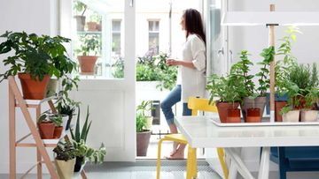 Green_home_0398