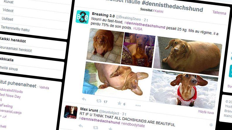 Dennis, mäyräkoira, twitter