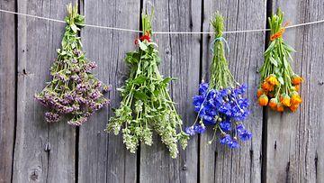 aromaterapia, kasvit