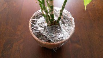 kukka, huonekasvi, muovikelmu (1)