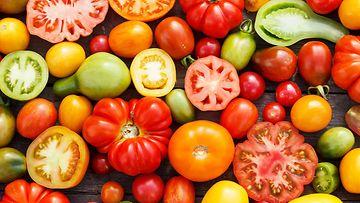 Tomaattilajit