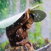 Copyright: Supplied by WENN.com, All Over Press. Photographer: Andrew Suryono courtesy of Sony World Photography awards .
