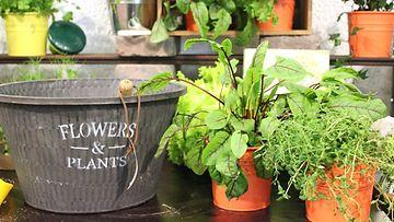 Näin valitset oikeankokoisen ruukun – liian pienessä kasvi kuihtuu paahteessa