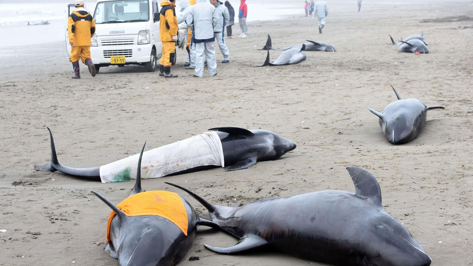 Delfiini suku puoli videot