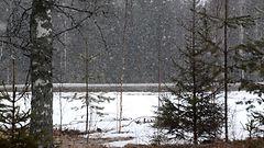 T��ll� surkein vaalis�� – lumisateita ja koleaa