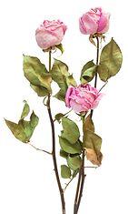 Kuivattuja ruusuja