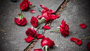 Ruusun terälehtiä