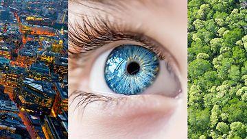 Maisema ja silmä