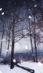 Lumisade metsässä