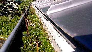 Tukkeutunut rännikouru valuttaa sadevedet  sähköpääkeskukseen